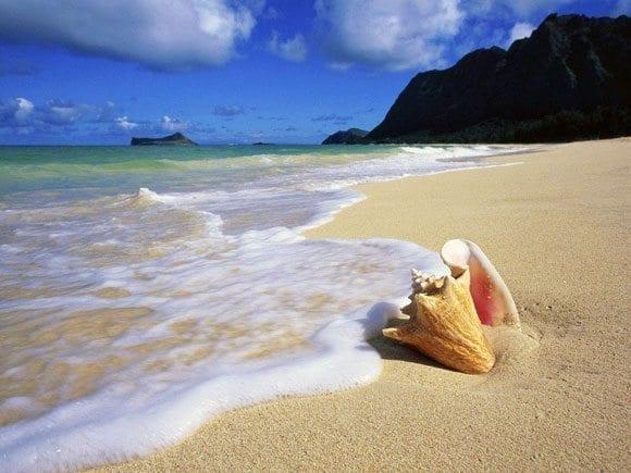 Y tú, ¿Qué harás en verano?