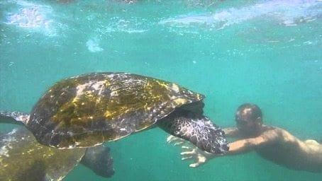 El Ñuro: las tortugas marinas te invitan a su hogar en Perú